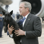 Bush Presidential Dog Barney Dies at Age 12