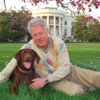 President Clinton's Dog, Buddy