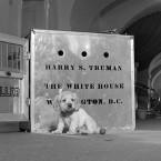 President Truman's Unwanted Dog, Feller