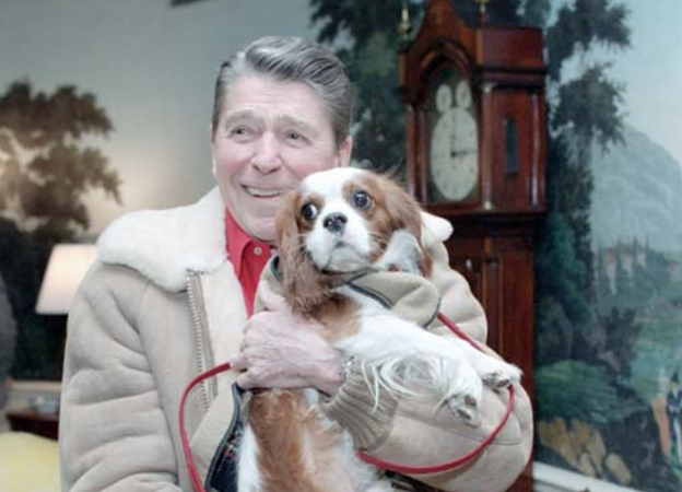 Image result for rex reagan