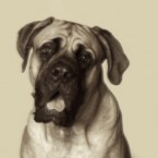 Rutherford B. Hayes's English Mastiff, Duke