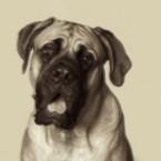 Rutherford B. Hayes's English Mastiff, Duke
