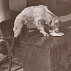 FDR's Dog, Winks