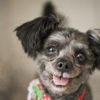 Meet South Korea's New First Dog